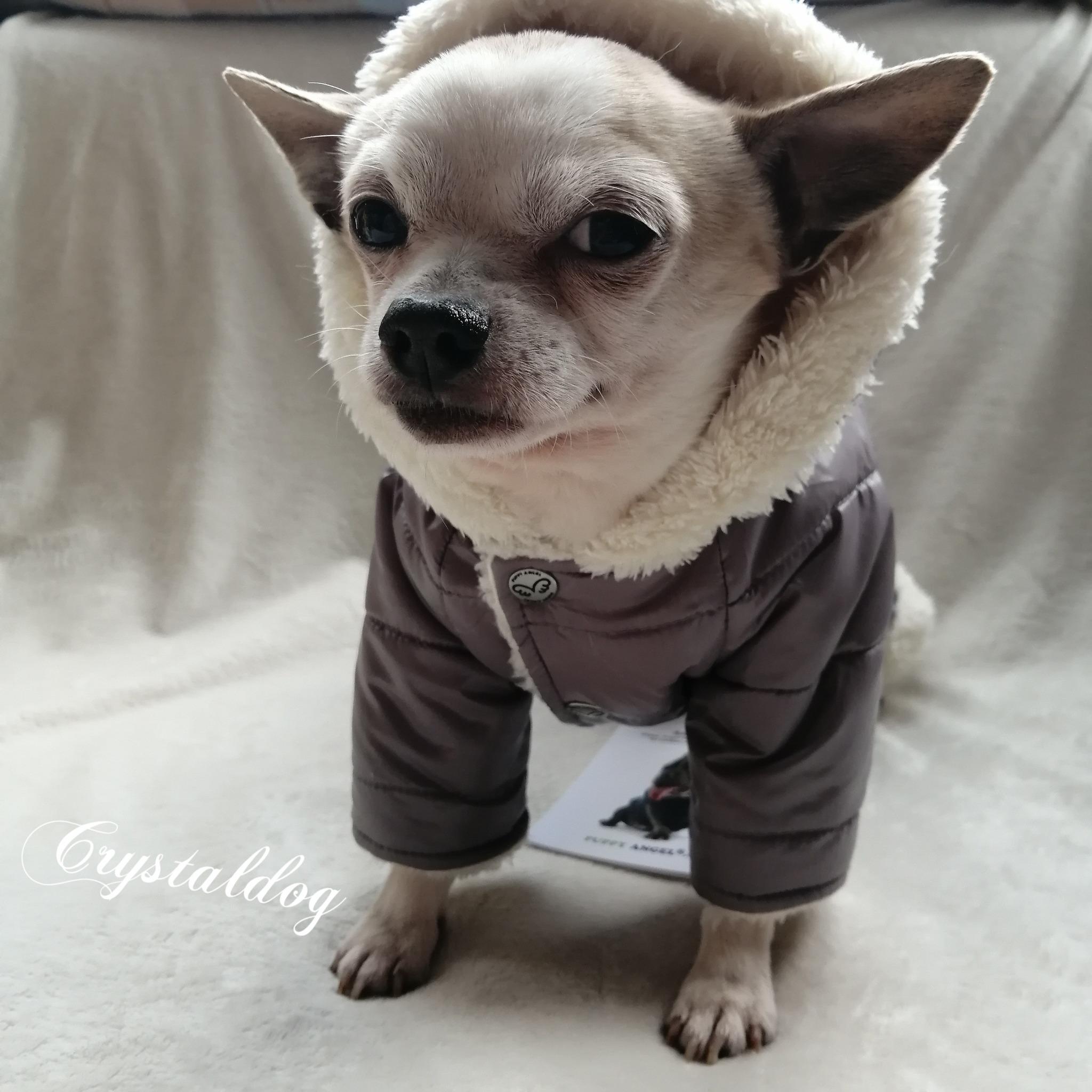544 PA - Комбинезоны для собак