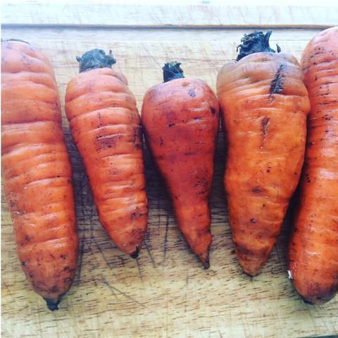Морковь, кг