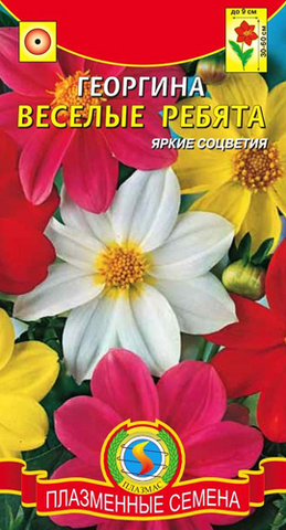 Семена Цветы Георгина Веселые ребята