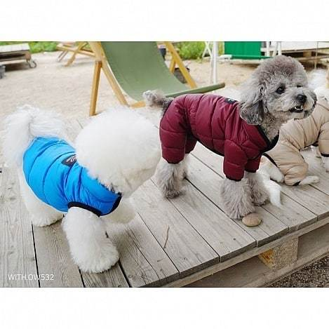 куртки для пуделя