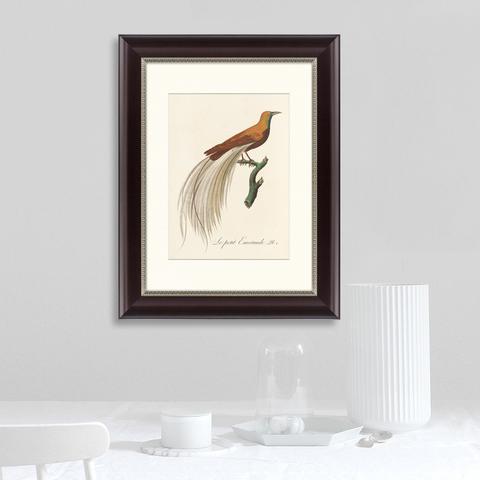 Луи Вьейо - Райские птицы Новой Гвинеи №1, 1775г