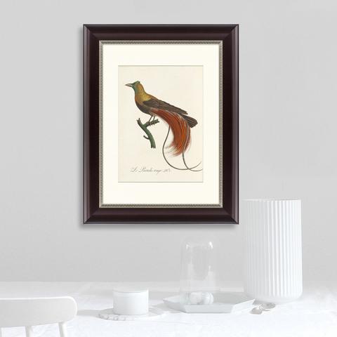 Луи Вьейо - Райские птицы Новой Гвинеи №2, 1775г