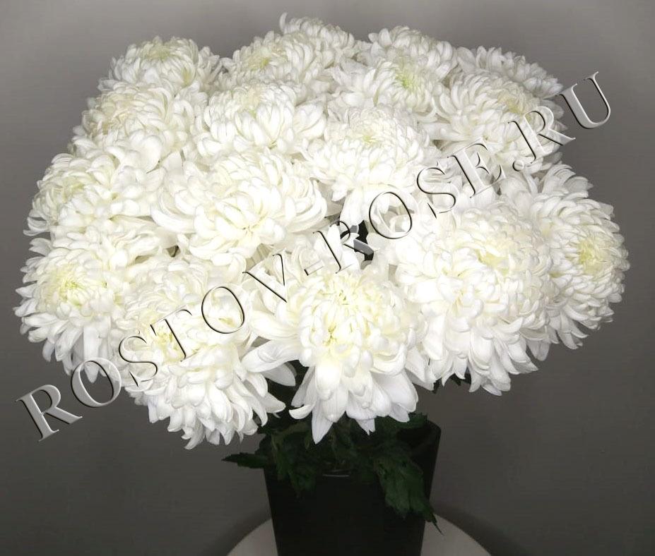 Белые шарообразные хризантемы