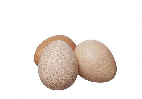 Яйца домашних цесарок, 10шт