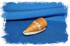 Конус кокинеус (Conus Coccineus)