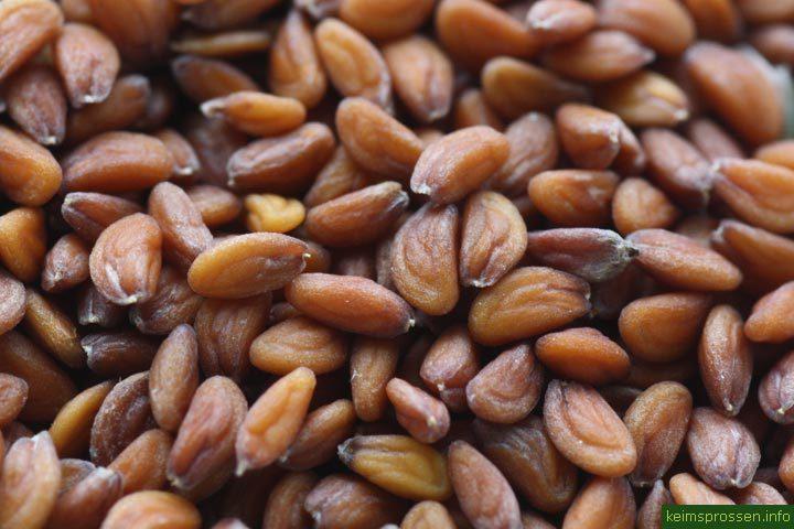 Кресс-салат семена BIO, 100г