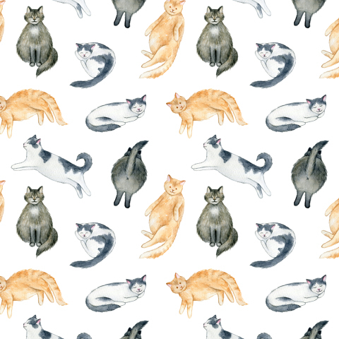 Cute cats. Милые котики