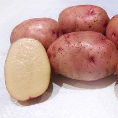 Картофель Жуковский (30 кг по 48 руб.)
