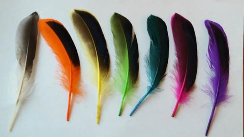 Перья утки декоративные ,  длина ок. 10-15 см. Уп - 10 шт. (выбрать цвет)