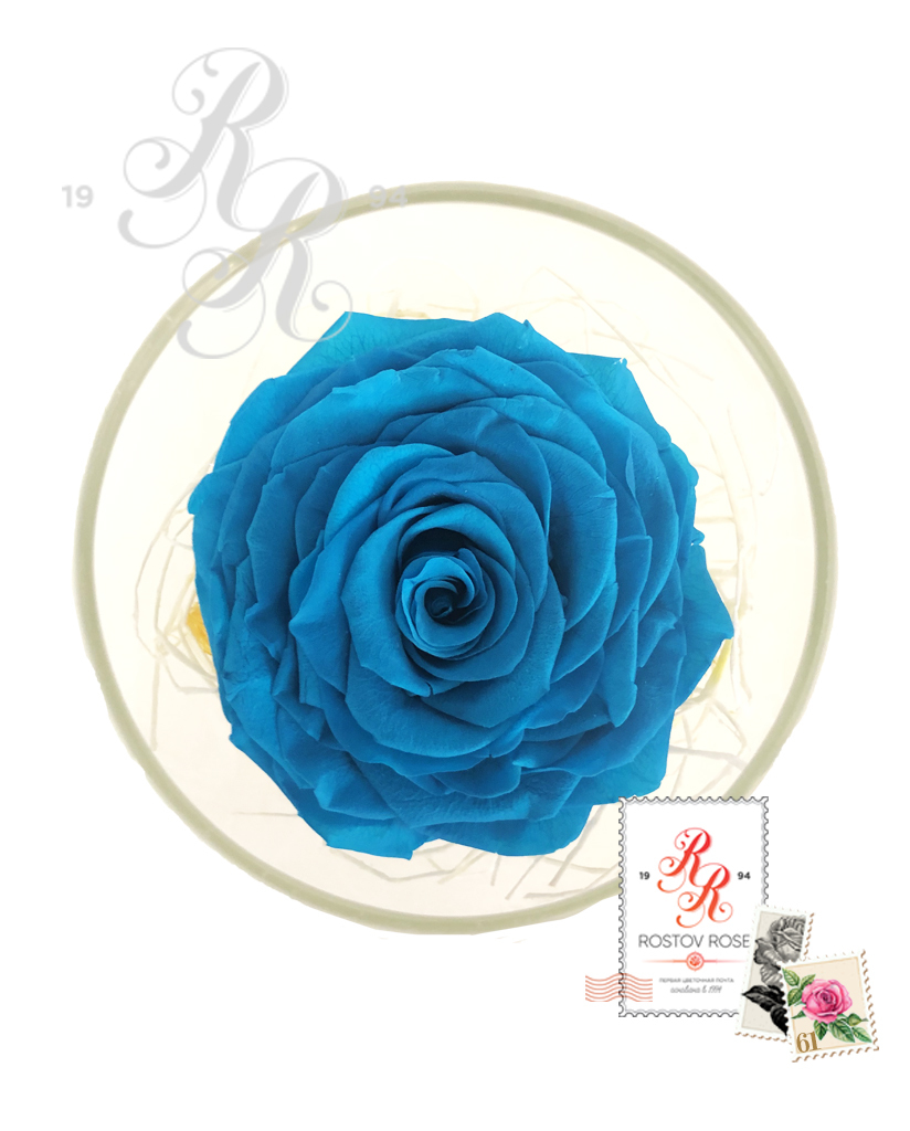 Роза голубая в бокале