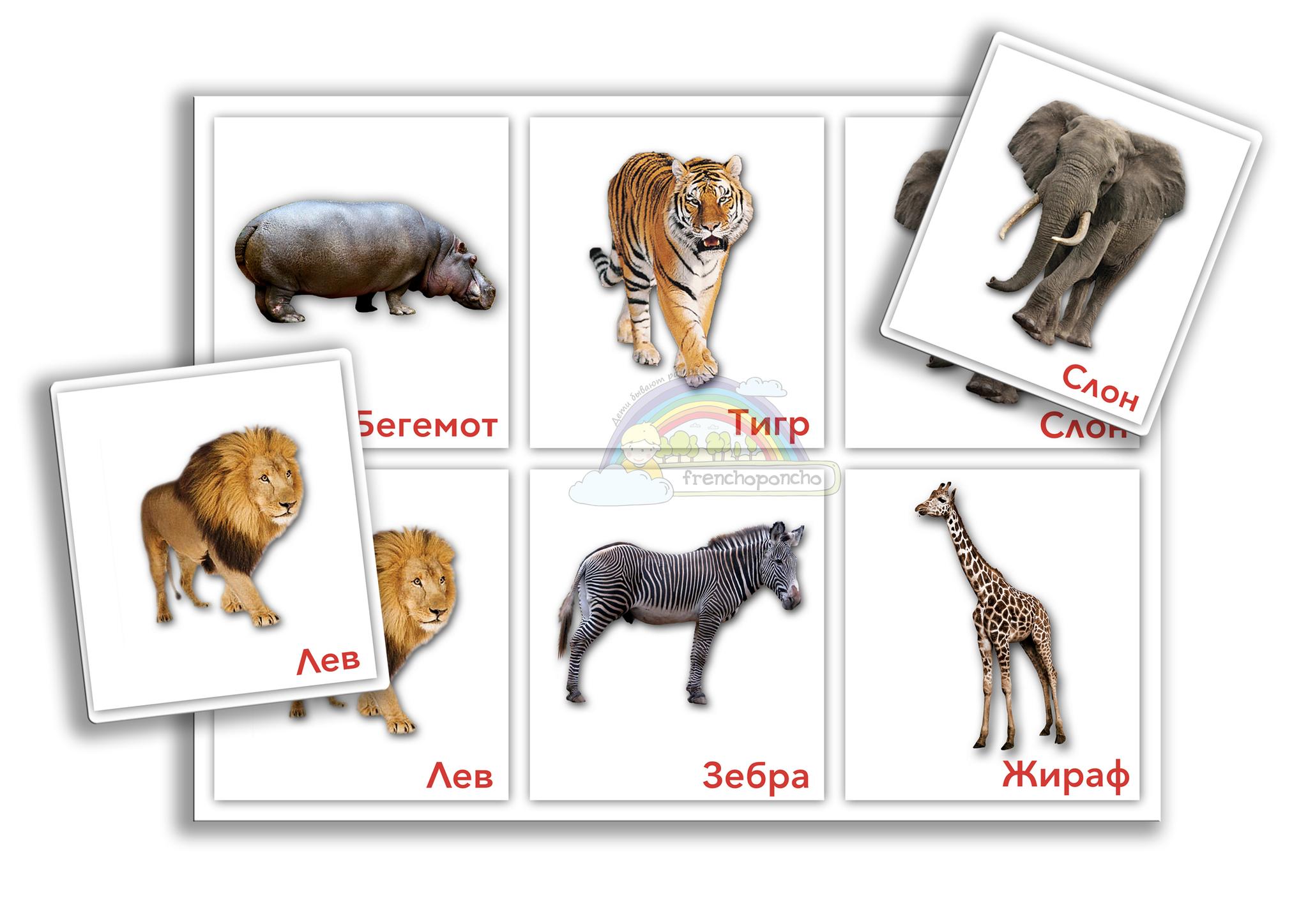 Животные южных стран. Слон и другие. Развивающие пособия на липучках Frenchoponcho (Френчопончо)