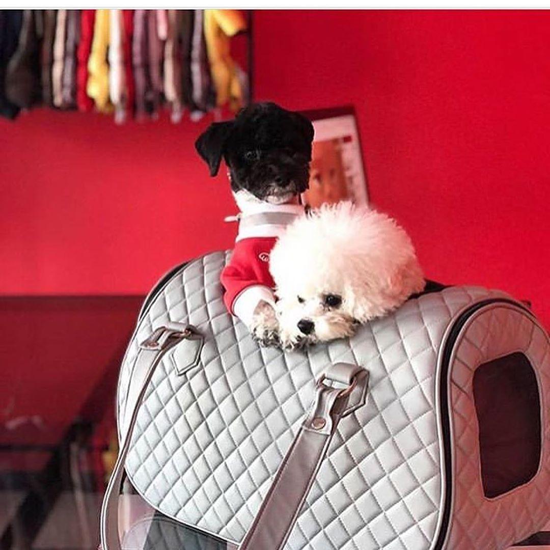 Сумка для двух собак