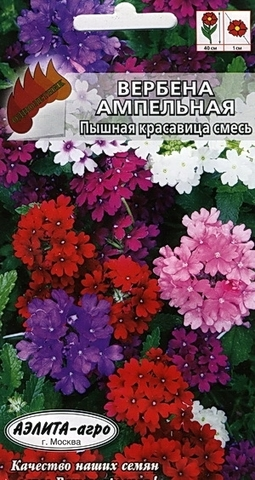 Семена Вербена Пышная красавица смесь, Одн