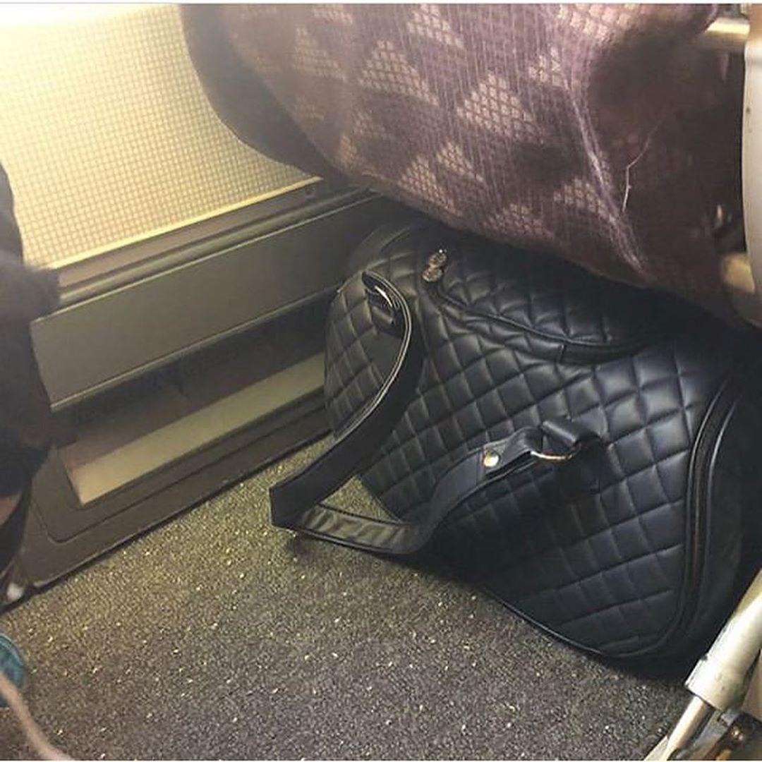 переноска для собак в самолете фото