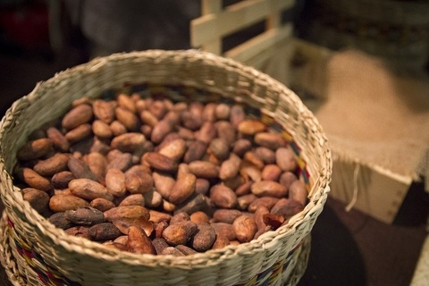 Какао бобы отборные