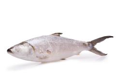 Молочная рыба замороженная~900г