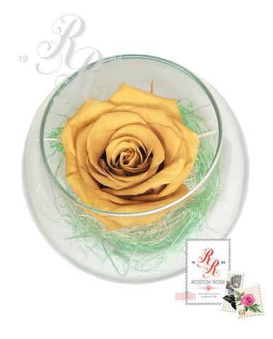 Роза золотистая в бокале