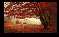 """Постер """"Красный листопад"""""""