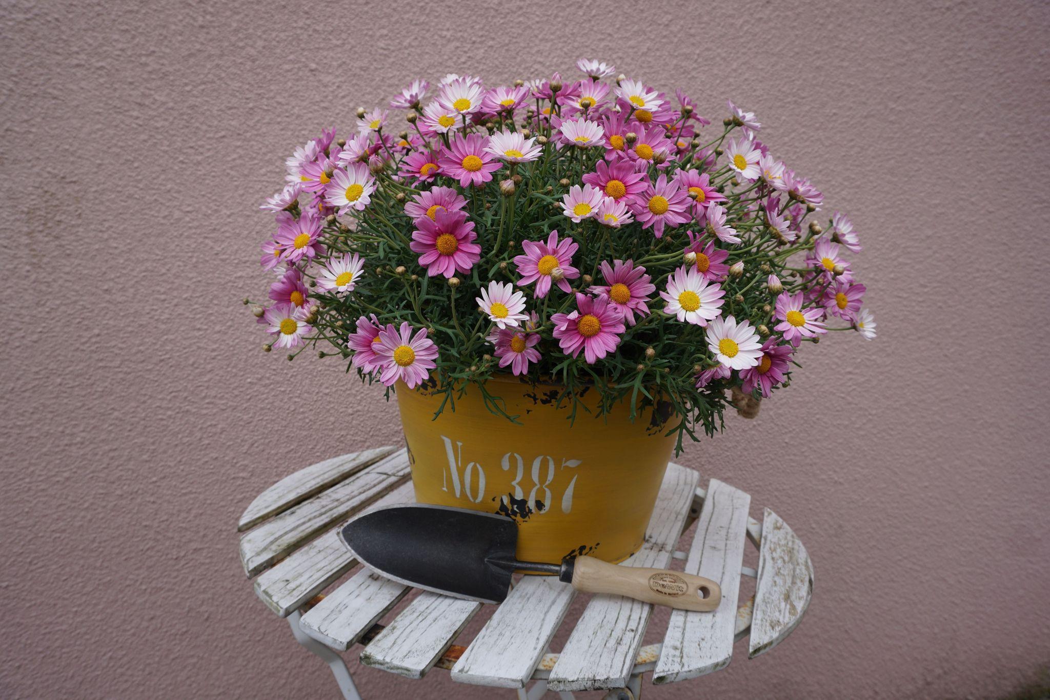 Совок садовый, с кованым полотном малой ширины DeWit