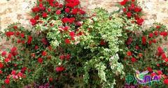 "Фотосетка ""Рада"" для декора заборов ""Розы на камнях"" 158х250 см."