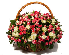 BASKET OF SHOE ROSES