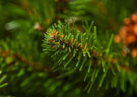 Искусственная елка Импeрaтрицa c шишкaми 155 cм зeленaя