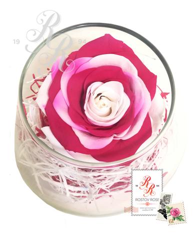 Роза красно-белая в бокале