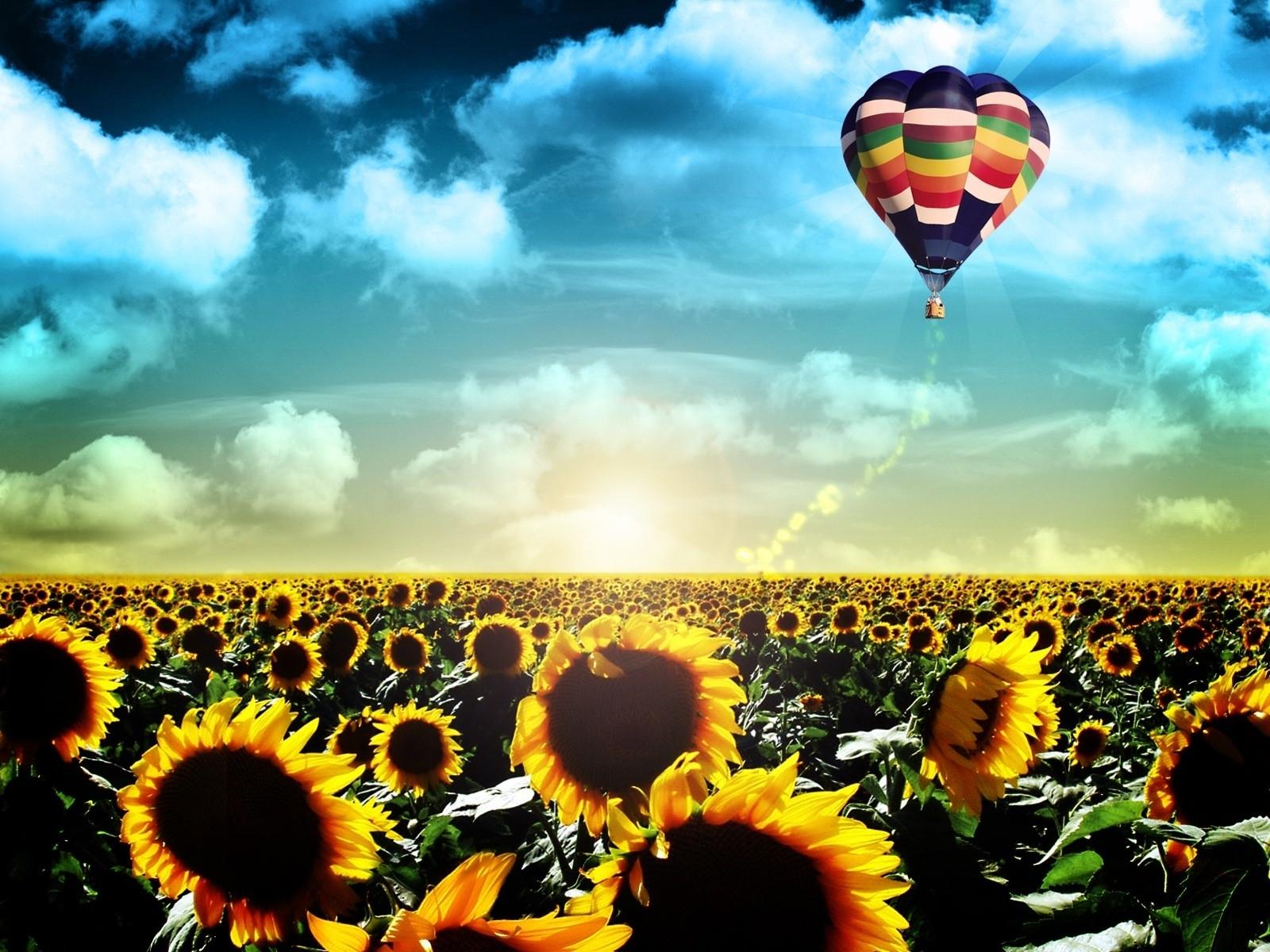 Картина раскраска по номерам 40x50 Воздушный шар над полем ...