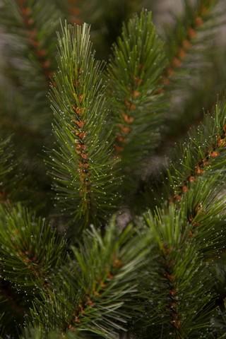 Искусственная елка Лесная Красавица стройная 185 см зеленая