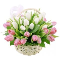 25 тюльпанов в корзине