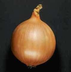 Дормо F1 семена лука репчатого, (Hazera / Хазера)