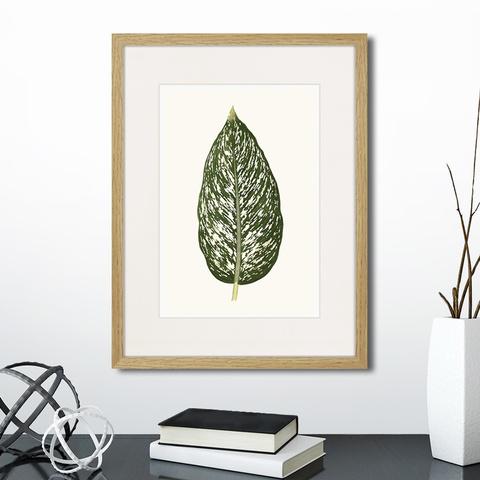 Эдуард Джозеф Лоу - Single leaf of a plant №1, 1865г.