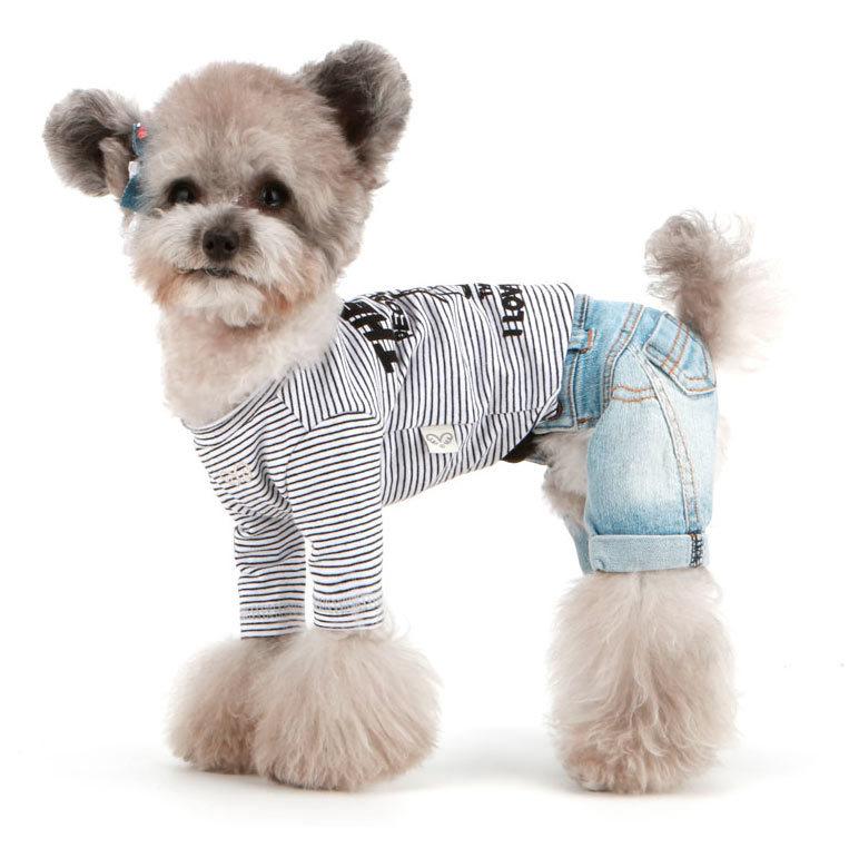 модная одежда для собак
