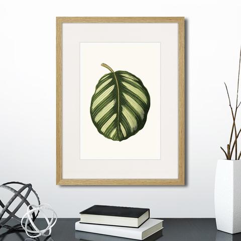 Эдуард Джозеф Лоу - Single leaf of a plant №2, 1865г.