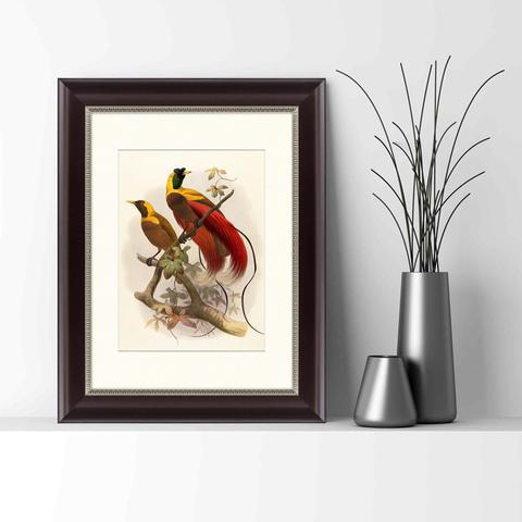 Даниэль Жиро Эллиот - Красная райская птица, 1880г_