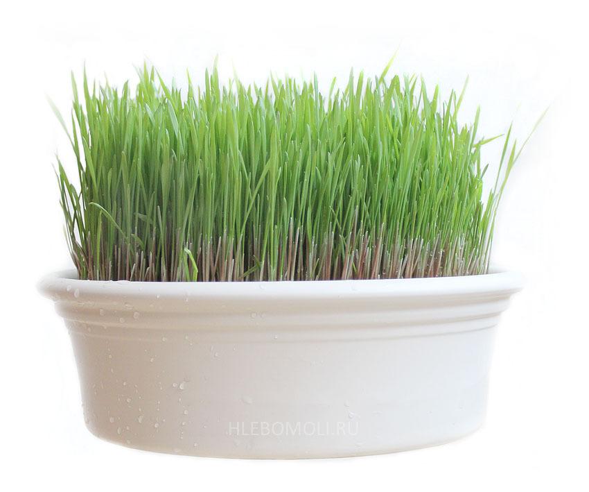 Проращиватель Eschenfelder для ростков пшеницы (Витграсс)