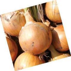 Фермо F1 семена лука репчатого, (Hazera / Хазера)
