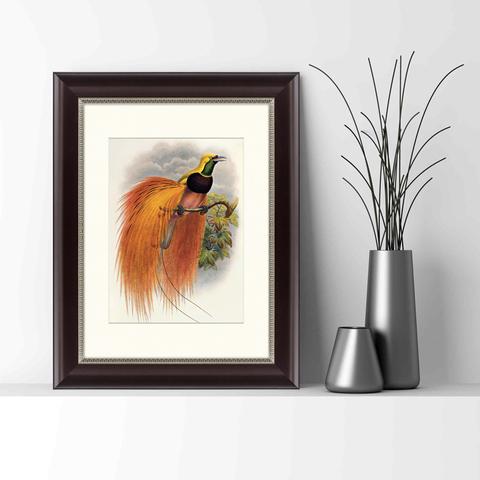Даниэль Жиро Эллиот - Красная райская птица, 1885г