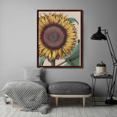 Басилиус Беслер - Large sunflower (Flos Solis Maior), 1713г.