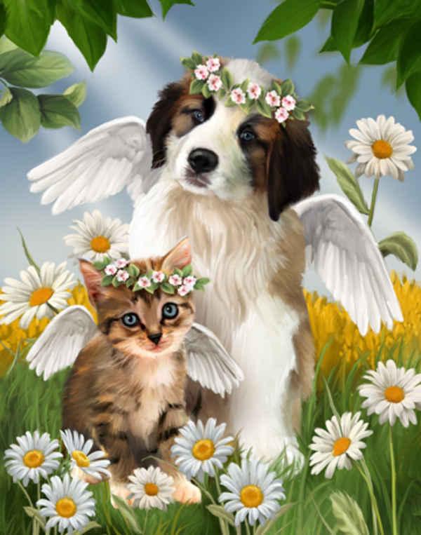 Картина раскраска по номерам 40x50 Кошка и собака ангелы в ...