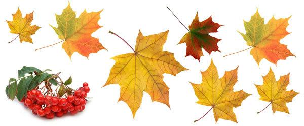 Водорастворимая бумага для мыла Осенние листья