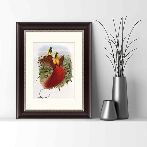 Даниэль Жиро Эллиот - Красные райские птицы, 1880г_