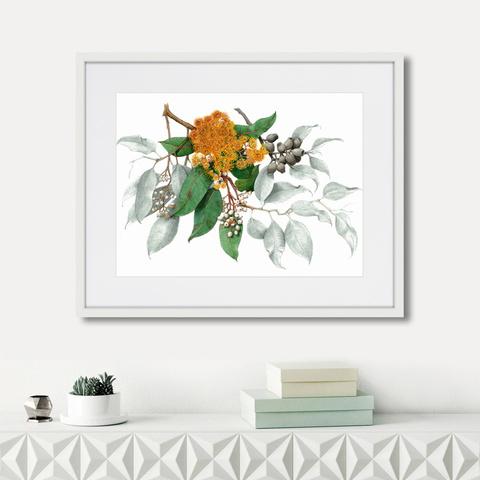 Джордж Крауз - Corymbia ficifolia