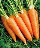 Морковь 1 кг. (урожай 2019 г.) от Ирины Верхотуровой
