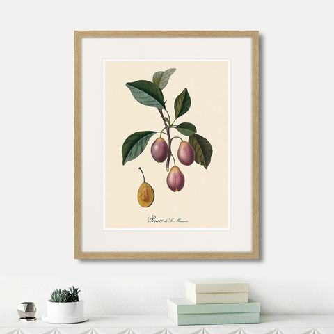 Уолтер Гуд Фитч - Juicy fruit lithography №9, 1870г.