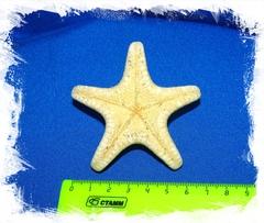 Сушеная морская звезда 5 - 7,5 см