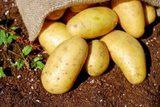 Картофель белый (урожай 2019) 2 кг. от Ирины Верхотуровой