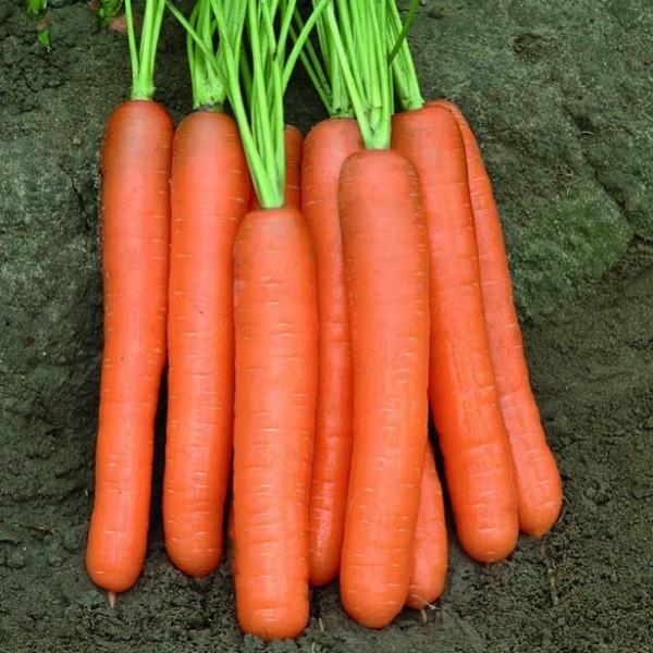 Rijk Zwaan Cемена моркови Монанта, Rijk Zwaan, 0,5 гр. import-files-56-563ea268-162f-4d92-bf54-06287e0817eb-600x600.jpeg