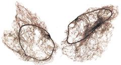 сеточка для волос паутинка, 2шт m. brown (средне-коричневая) sibel