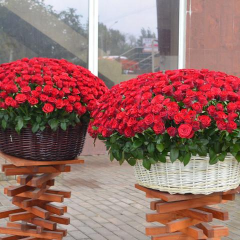 VIP! Композиция в корзине из 651 розы